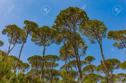 pine-trees-forest-of-jezzine-in-south-lebanon-middle-east.jpg